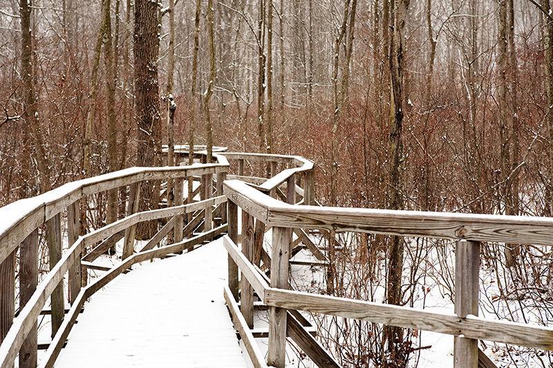 Great Swamp walkway in winter during light snow