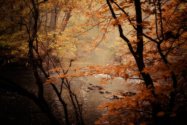 Misty River on a Fall morning
