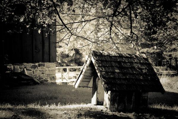 Millbrook Village Dog House