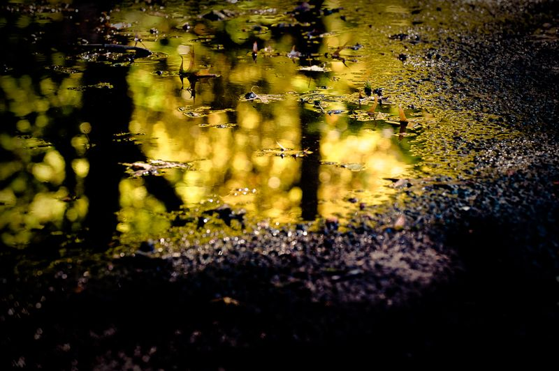Fall colors in a puddle on the street