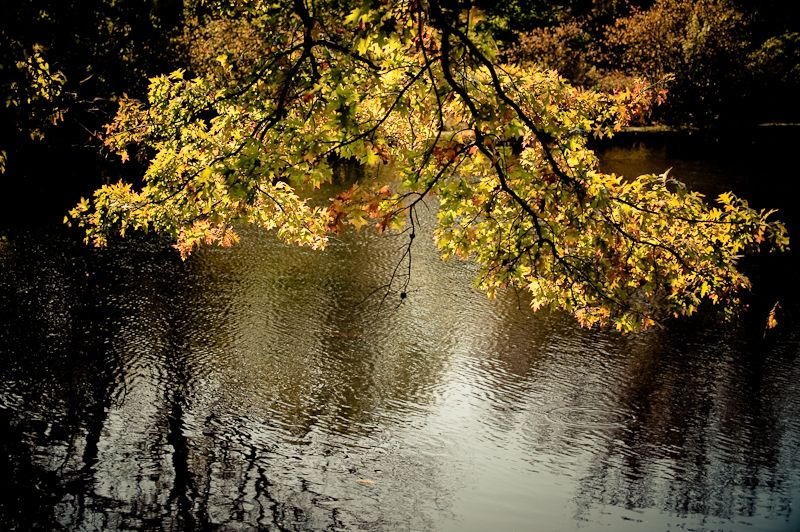 Back-lit fall foliage at the pond
