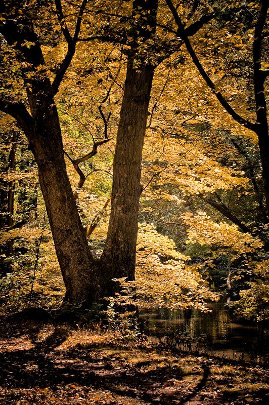 Brightly lit fall foliage