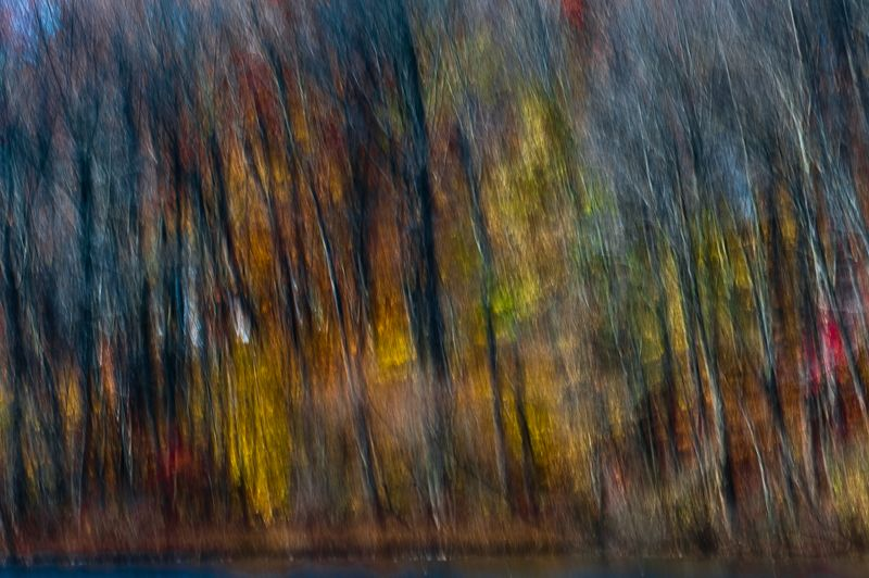 Colorful fall abstract of woods