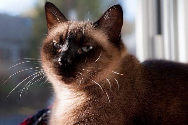 Missy cat sitting in the window