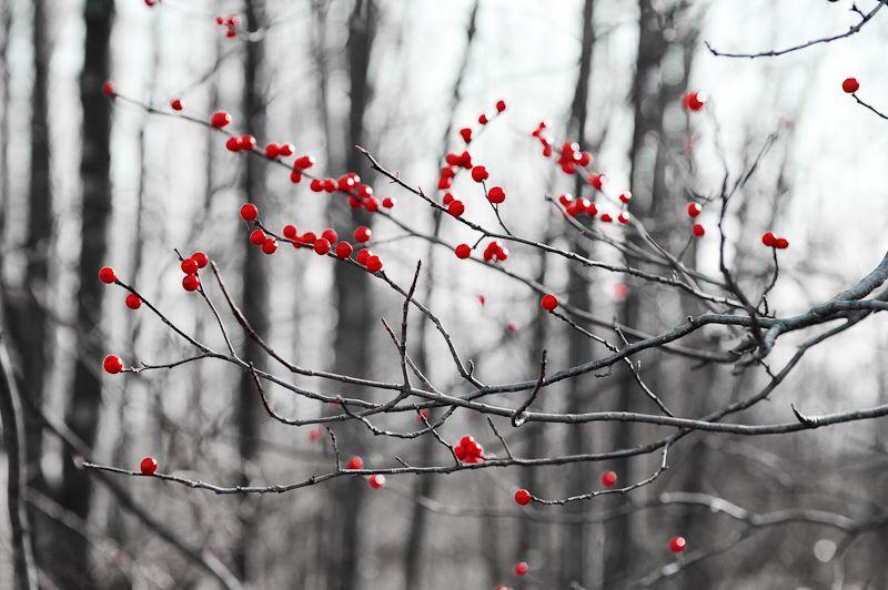 Winterberry woods Great Swamp