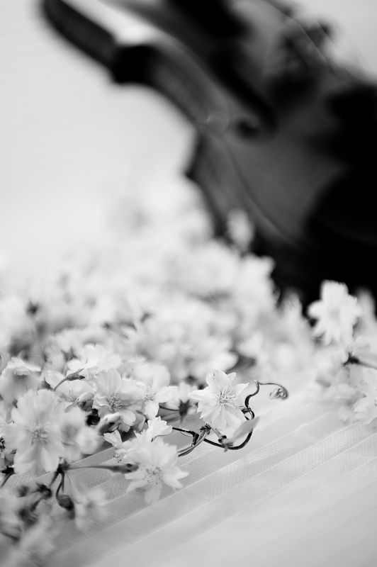 violin and flowers 2