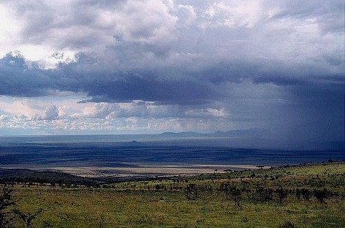 storming the Serengeti