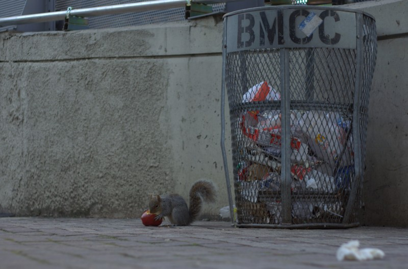 squirrel, BMCC, CUTE