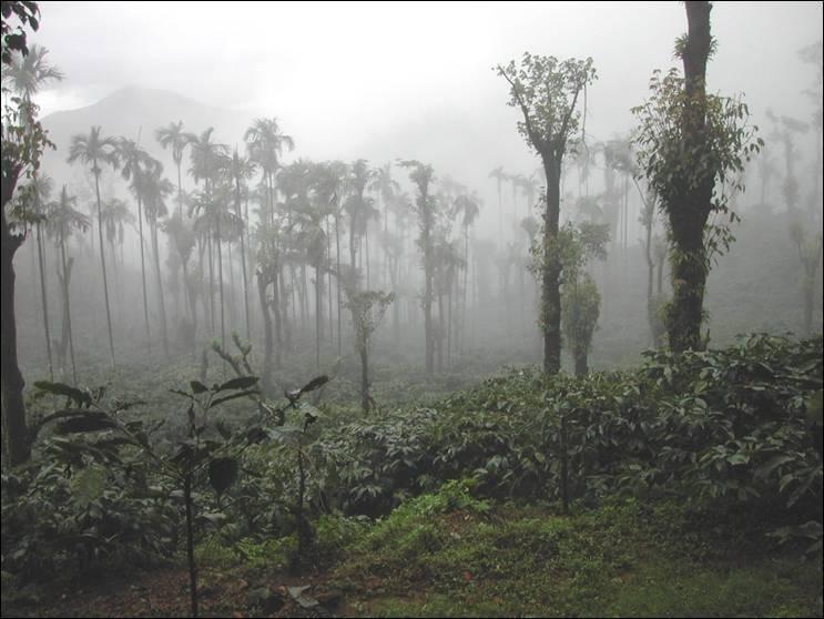 Pre monsoon