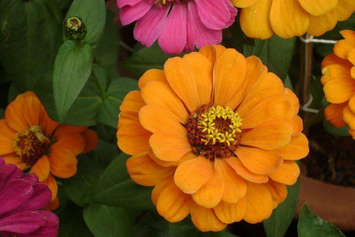 Flower....