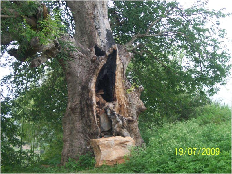 Wood Pecker..?