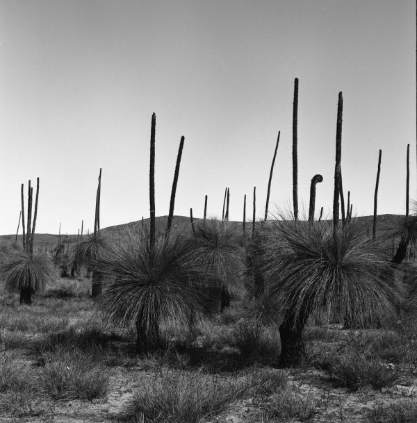 Valley of the Grass Trees