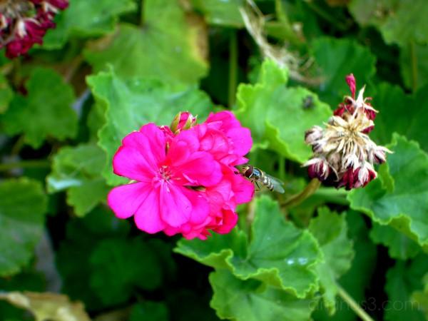 Little busy bee...
