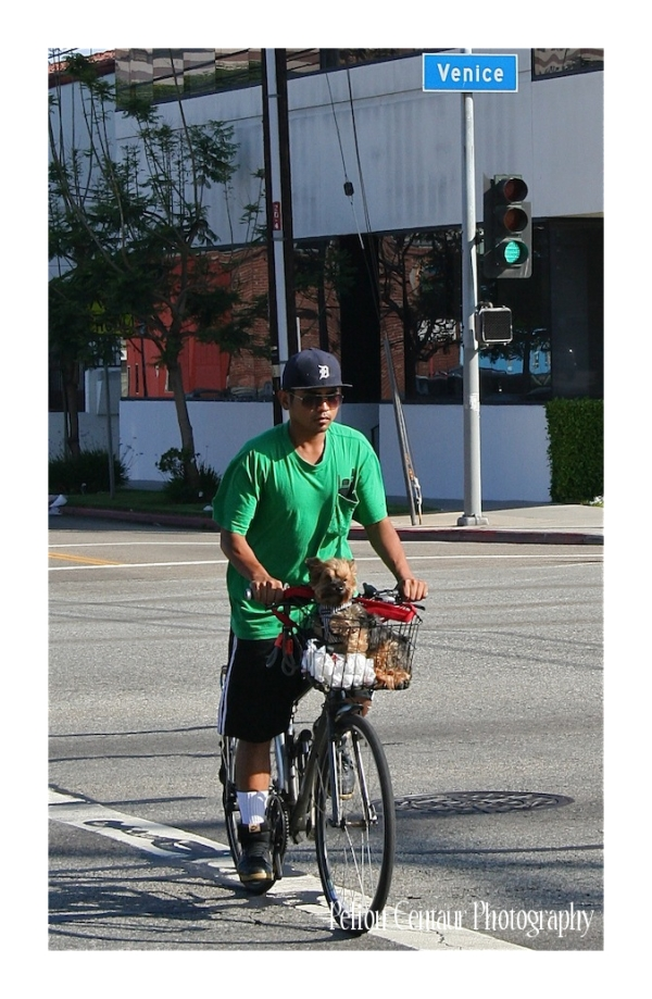 Guy rides along with his puppy