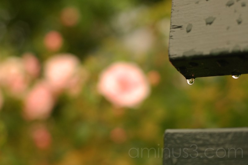 Water droplet off a bench