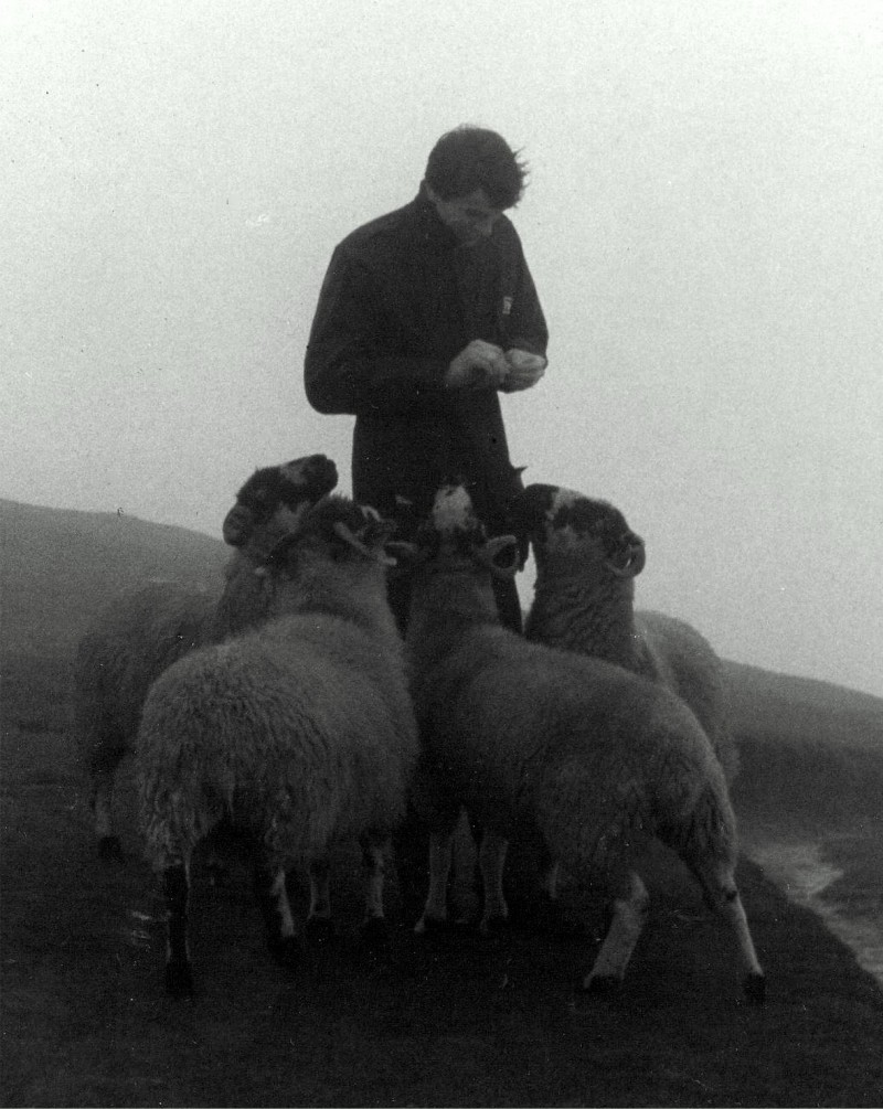 'Feed my sheep'