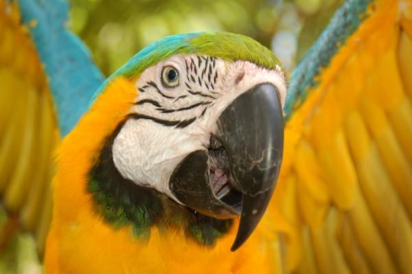 Tropical Bird - II