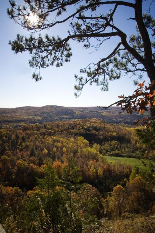 Forêt laurentienne - Laurentian forest