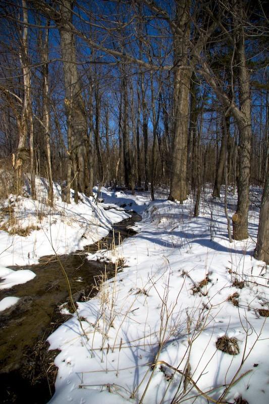 Ruisseau printanier