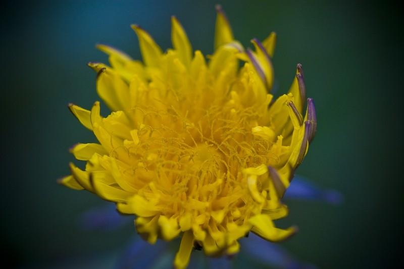 Fleur - 1