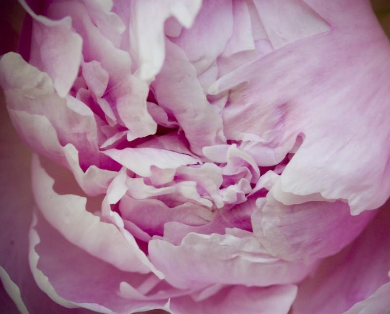 Fleur - 6