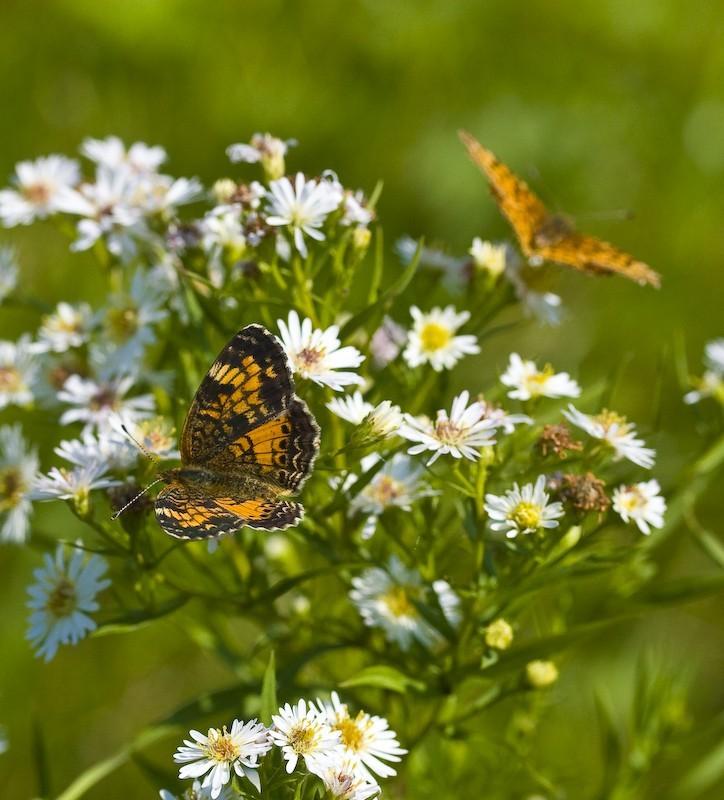 Papillons d'automne