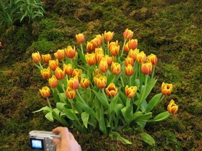 نمایشگاه گل و گیاه تهران