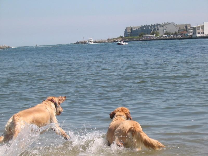 Manasquan Dogs