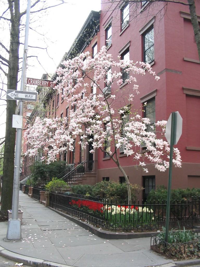 Cranberry Street
