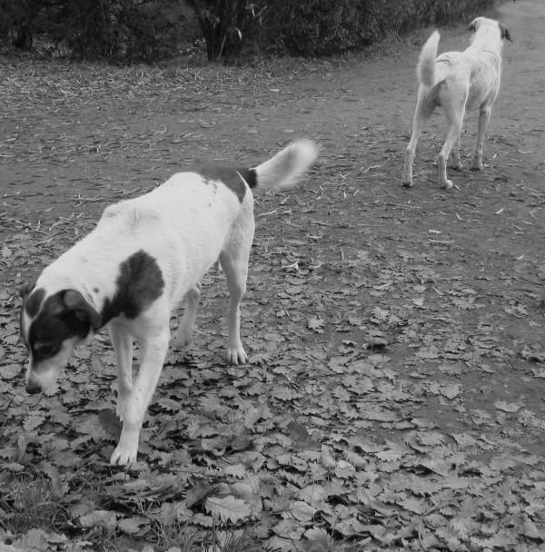 dogs walking apart