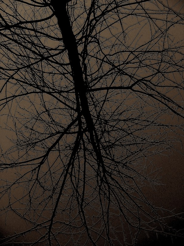 branches in gray sky