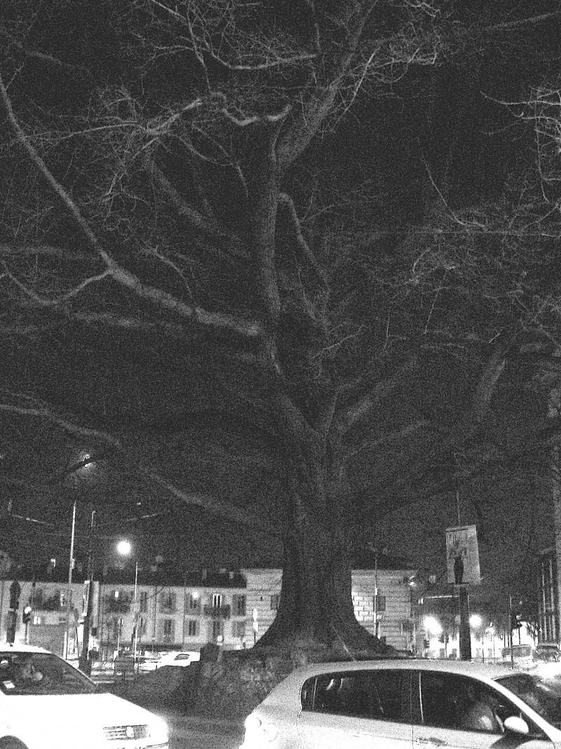 ancient tree city center bustle