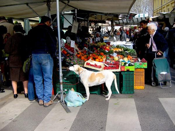 dog at street market