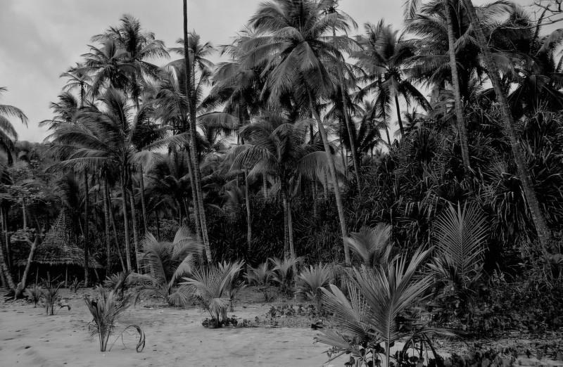 Anse Mamin, St. Lucia