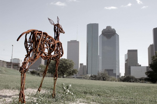 Deer in the City