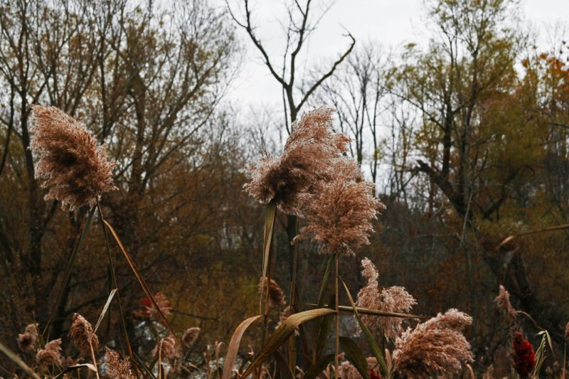 Along the Bushkill creek/11