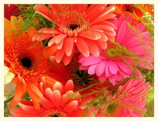 close-up on flowers -- gros plan sur des fleurs