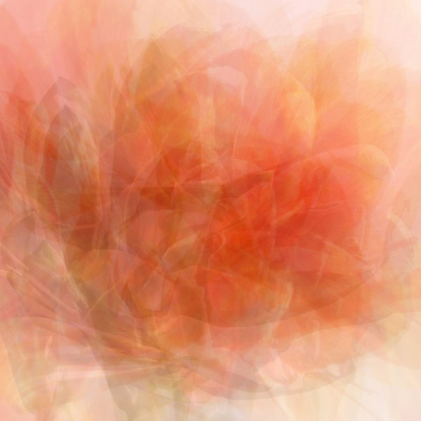 superposition d'amaryllis abstait