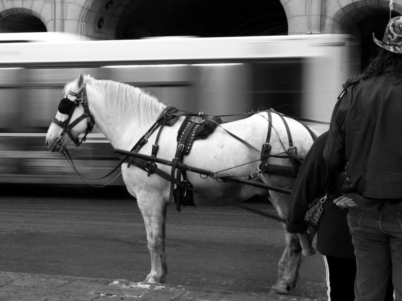 a horse and a bus in old quebec