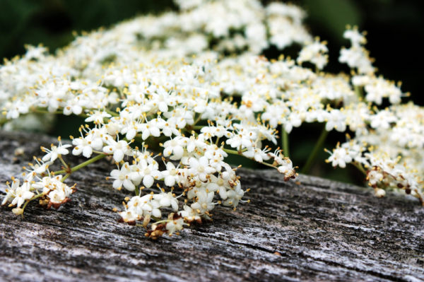 white flowers on wood