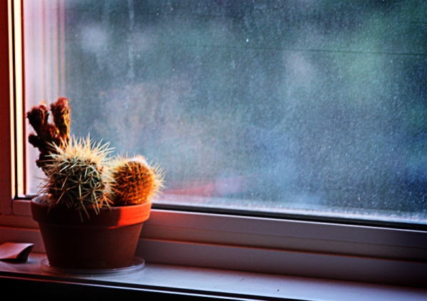 cactus near the window