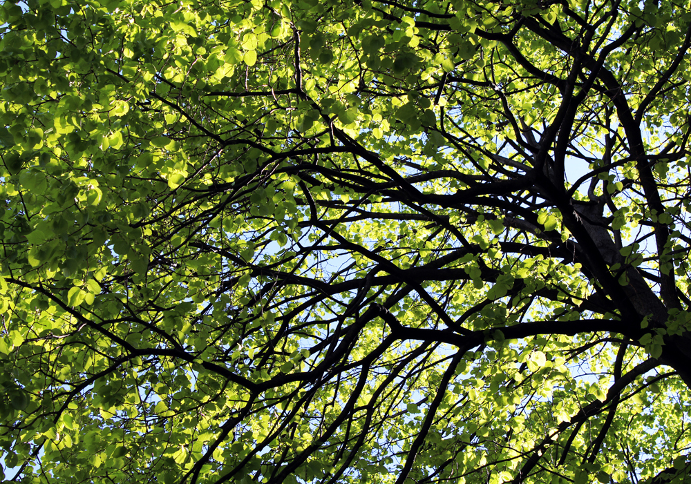 sun playing in green leaves