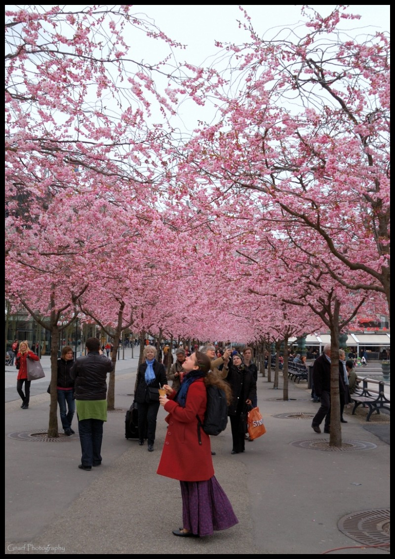 Day of the Cherry Blossom