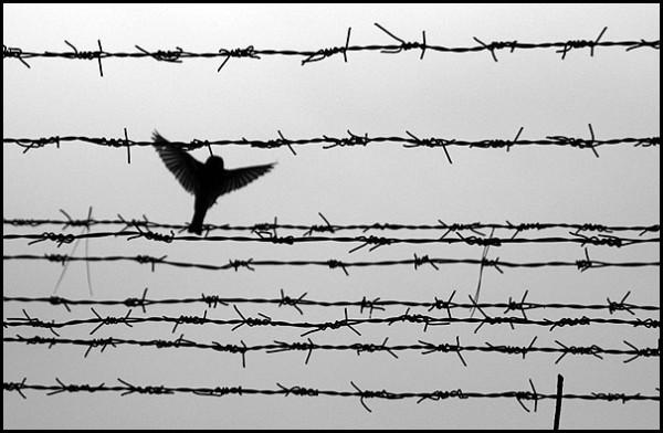 Freedom ....