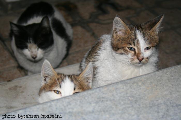 گربه های خانه ی  پدری