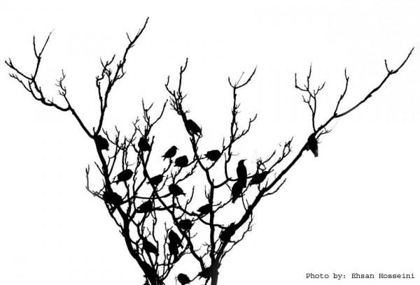 sparrow's tree