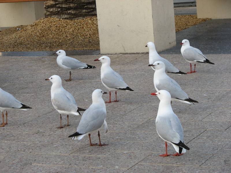 Oh no! More seagulls!