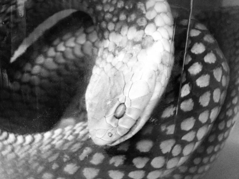 snake-in-a-jar