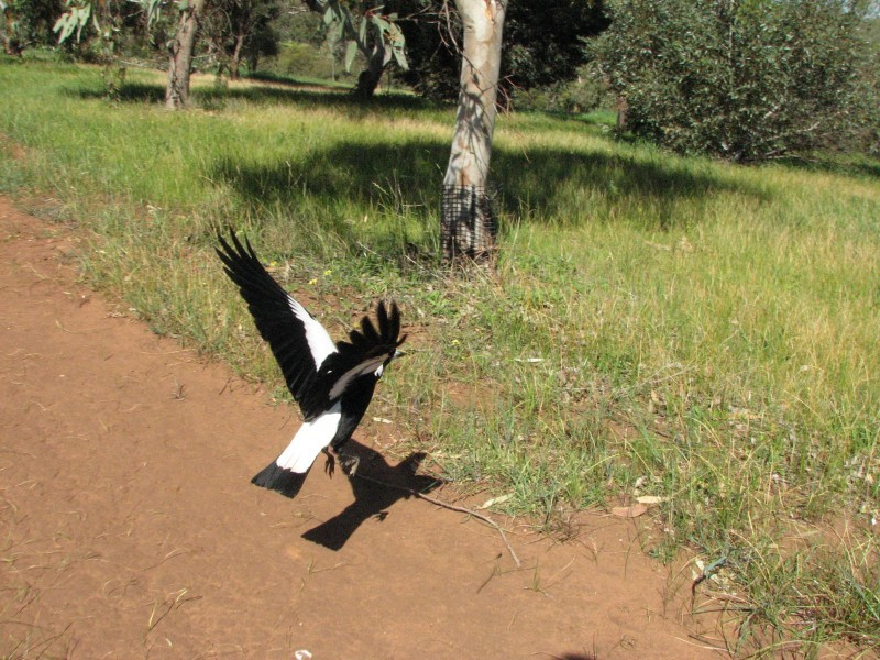 Magpie Takeoff