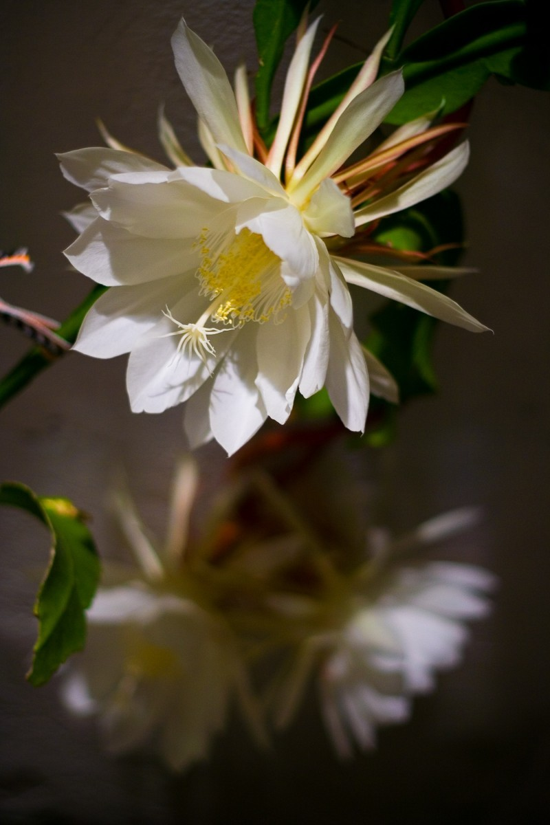 Flower, Night Bloom